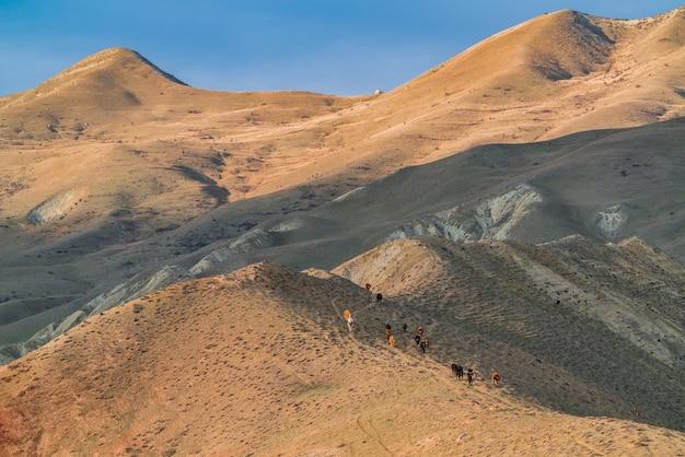 山の中の牛の群れ