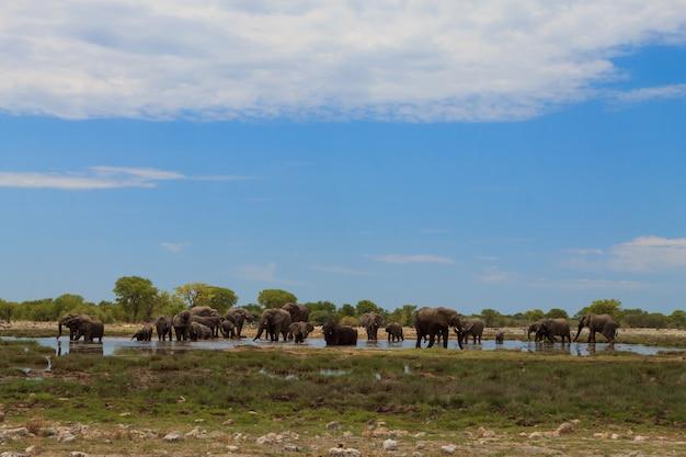 ナミビアのエトーシャ国立公園からの象の群れ