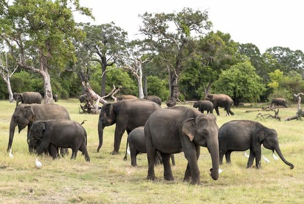 自然の風景の中の象の群れ