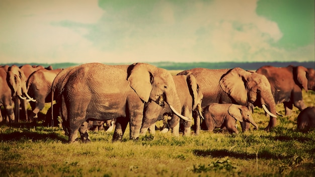 코끼리 떼