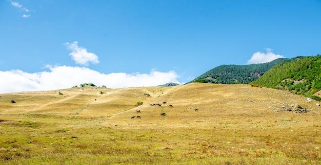 Табун лошадей вместе едят траву в поле лошади на лугу