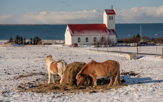 教会を背景に放牧している馬の群れ