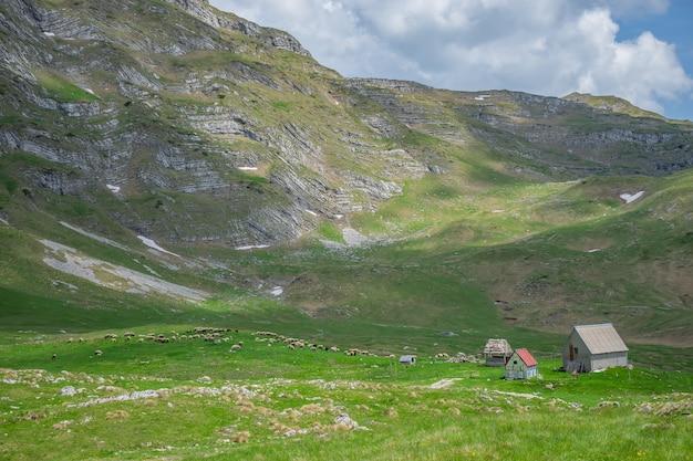 緑の山の牧草地で放牧している羊の群れ。