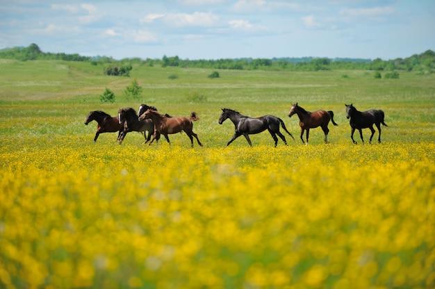 フィールドの馬の群れ