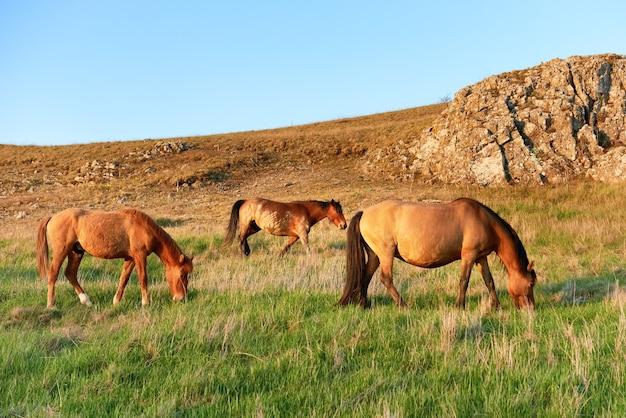 Стадо диких пасущихся лошадей на поле с зеленой травой