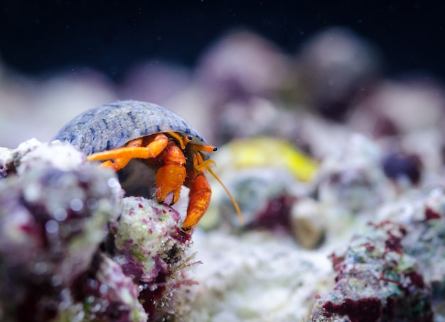Hermit crab at the bottom of the sea