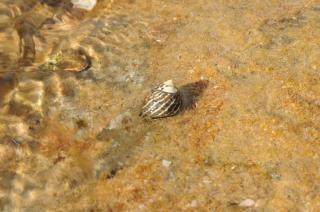 ヤドカリの殻