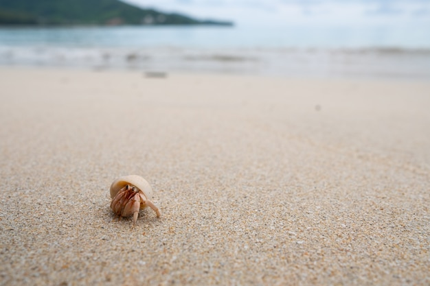 Hermit crab walking on the beautiful beach.