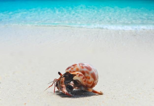 태양 조명과 함께 해변에 산책하는 소라 게.