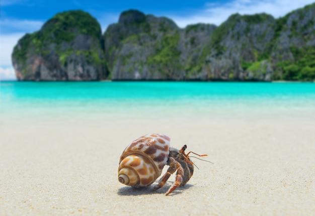 해변에서 산책 소라게