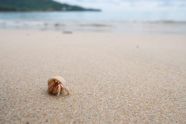 ヤドカリは美しいビーチの上を歩きます。