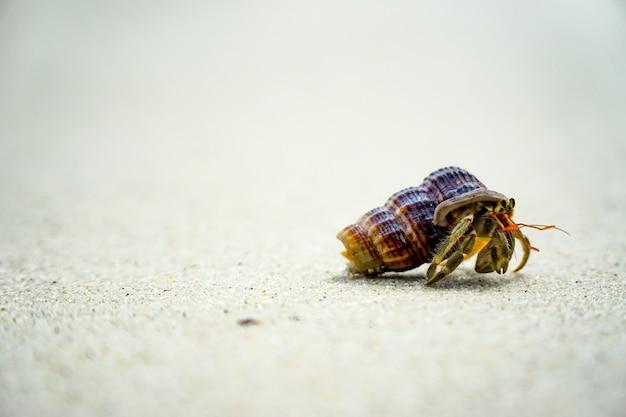 해변을 따라 서식지에 조개 껍질을 사용하는 소라게