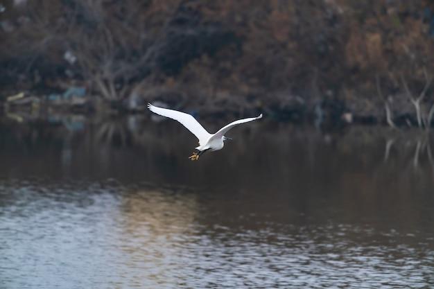 호수 위를 날고 있는 헤론