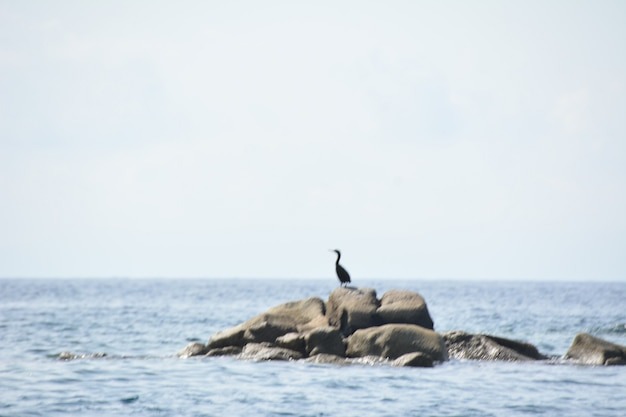Цапля на скалах в море недалеко от вилласимиуса, сардиния италия