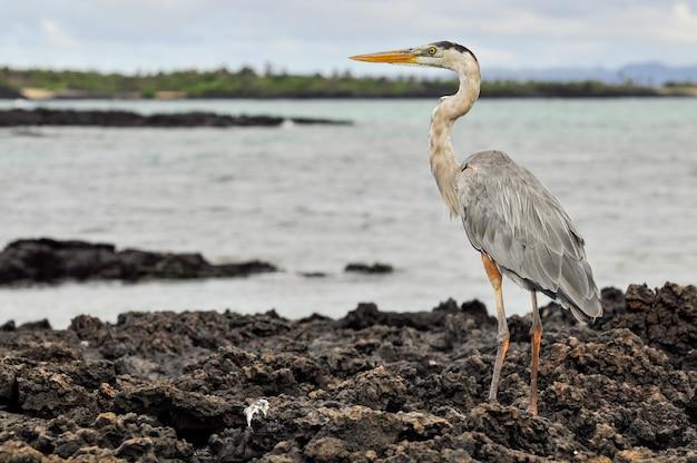 A heron on the rocks