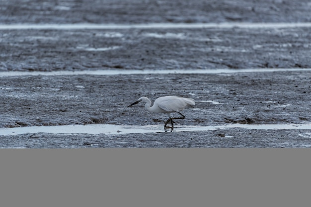 Herons on the beach are looking for food