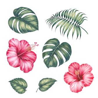 Hibiscus flowers and palm tree leaves.