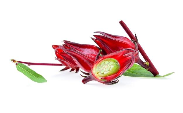 Плоды гибискуса sabdariffa или roselle, изолированные на белом фоне