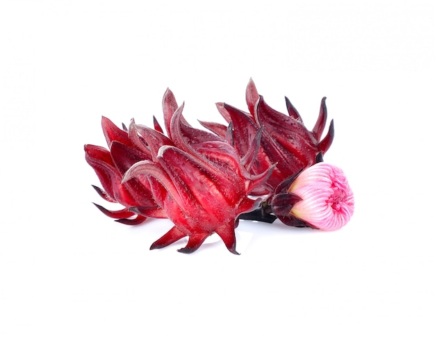 Плодоовощи гибискуса sabdariffa или roselle изолированные на белой предпосылке.