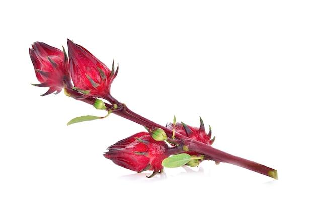 히비스커스 sabdariffa 또는 로젤 과일 흰색 절연