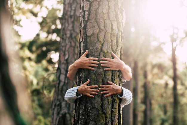 Hidden couple of senior hugging with love an old big tree pine in the forest