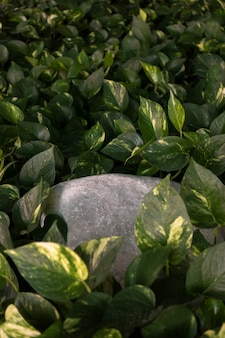 緑の隠れた岩は浅い焦点を残します。