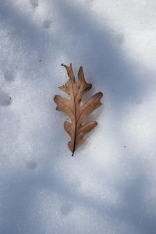 High angel shot of an autumn leaf on the snow