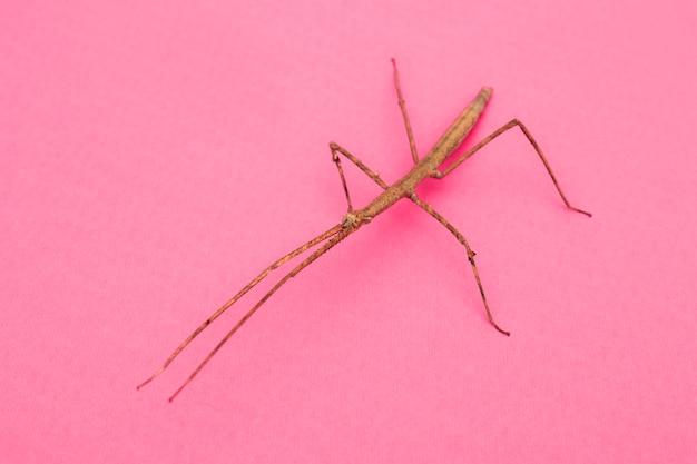 High angle of arthropod mantis