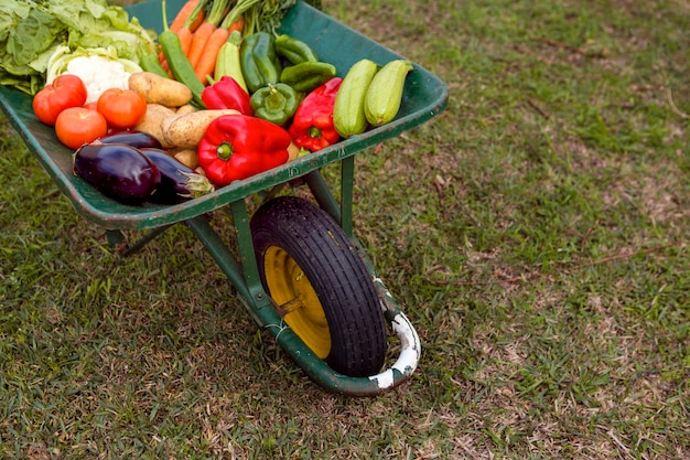 High angle assortment of vegetables in wheelbarrow