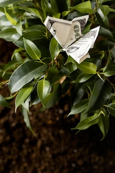 High angle of banknote on plant with leaves