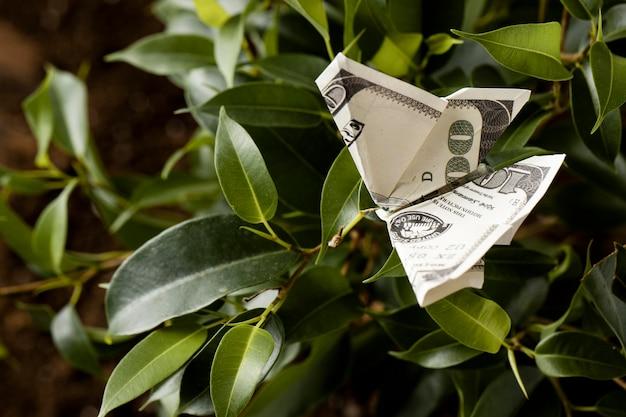 Alto angolo di banconota sulla pianta