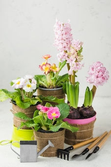 High angle blooming flowers pots