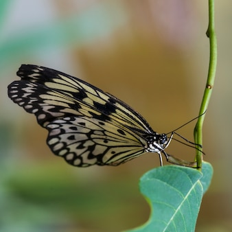 High angle butterfly on stem