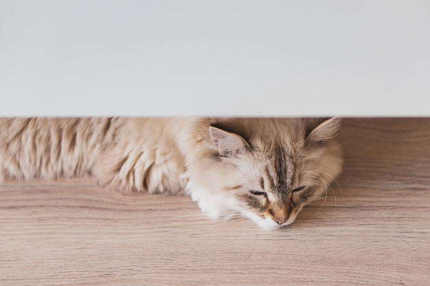 High angle closeup shot of a cute cat lying on the wooden floor under a white surface