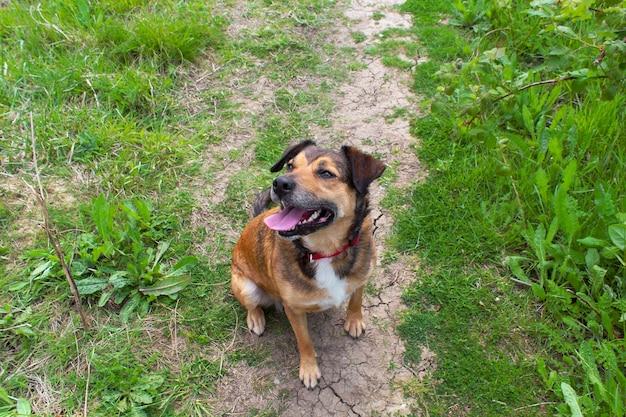 Colpo del primo piano dell'angolo alto di un cane da compagnia carino seduto sul terreno in lodmoor country park, dorset