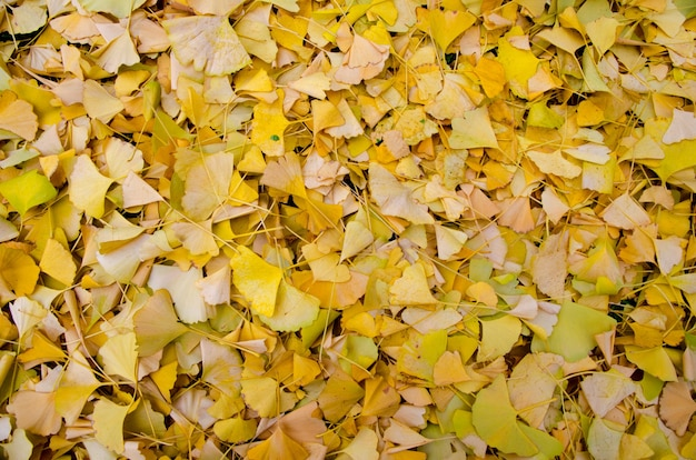 High angle closeup shot of fallen yellow leaves spread on the ground