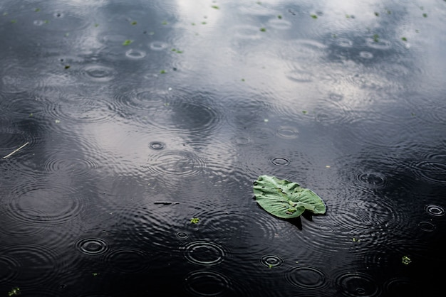 High angle closeup shot of an isolated green leaf in a puddle on a rainy day