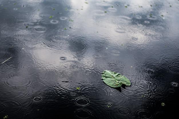Крупным планом снимок изолированного зеленого листа в луже в дождливый день под высоким углом