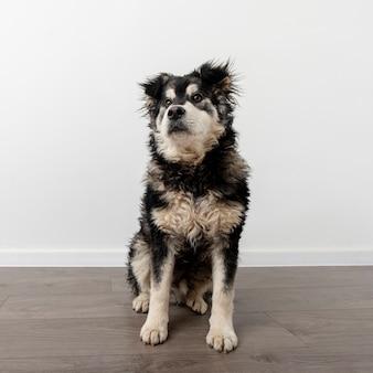 High angle cute dog at home