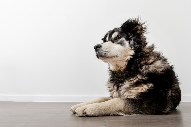 Cane dell'angolo alto che si siede sul pavimento