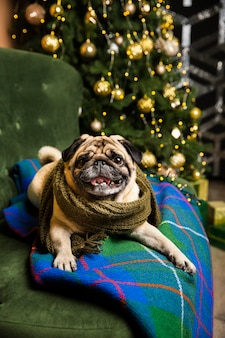 High angle dog wearing scarf view