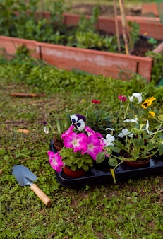 High angle flowers in pots on ground