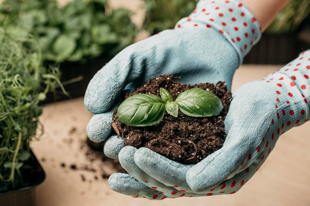 High angle of hands with gloves holding soil and plant