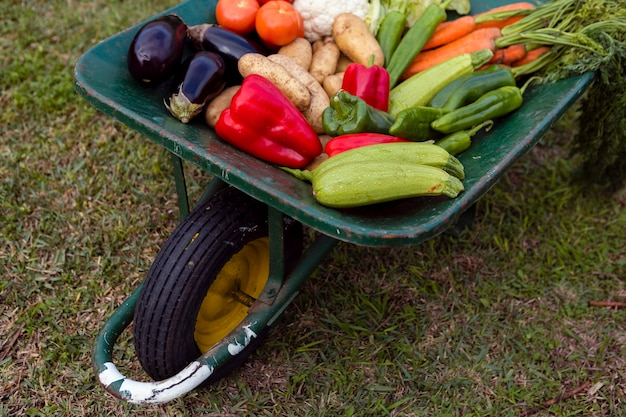 High angle mix of vegetables in wheelbarrow