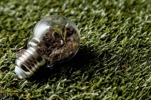 Высокий угол лампочки с растением на траве
