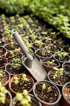 鉢植えの植物が付いている金属のシャベルの高角