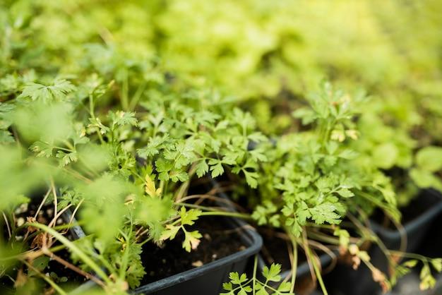 黒い鉢の植物の高角