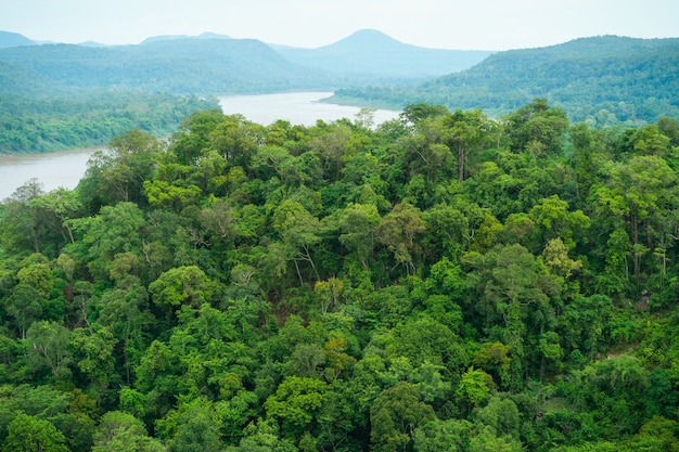 木、森、山、川の高角度の写真。