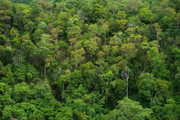 木、森、山のハイアングル写真。上面図。
