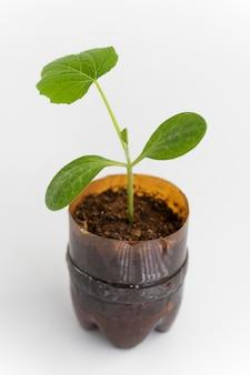 Растение под высоким углом в пластиковой бутылке
